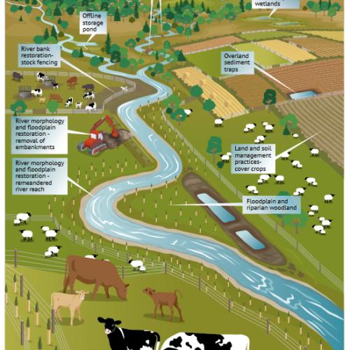 Naturalne zarządzanie powodzią - Szkocja