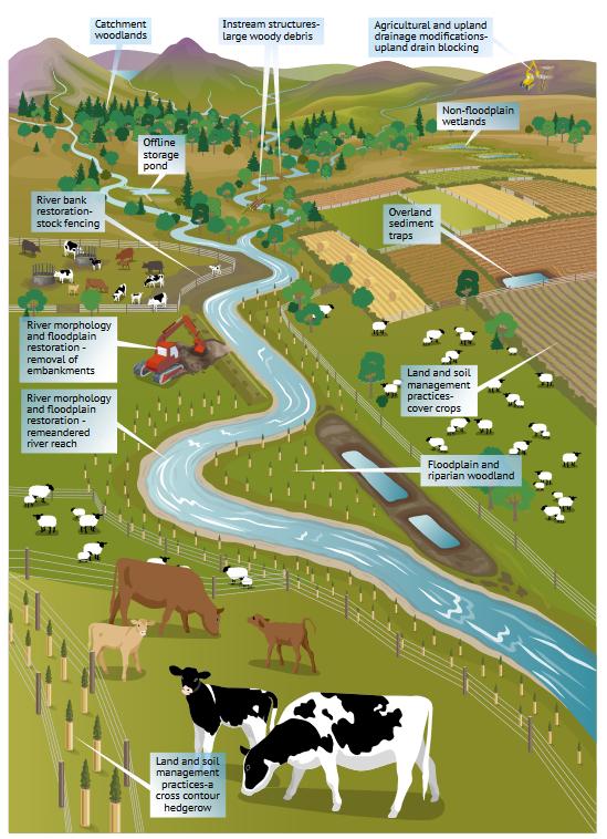 Naturalne zarządzanie powodzią – Szkocja